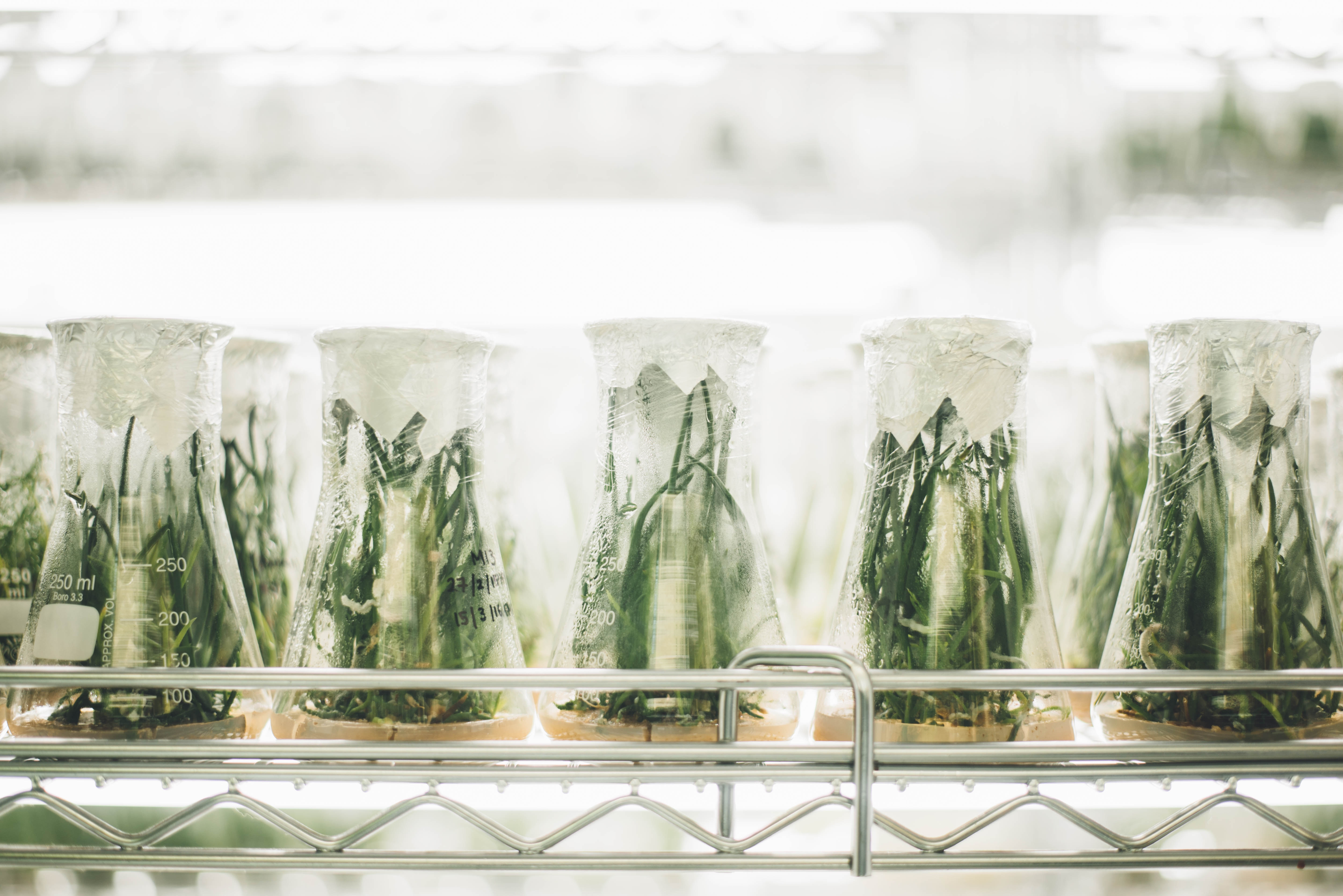 Job Opportunity – Researcher in tissue culture